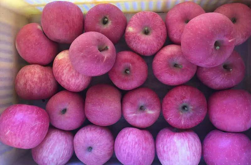 革命圣地洛川苹果
