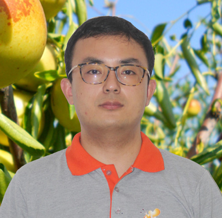 <b>小黄蜂冬枣团队王育锋</b>
